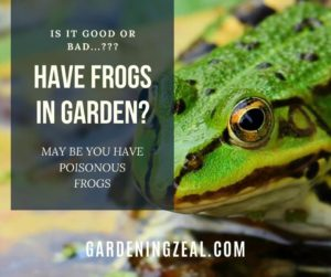 frogs in garden