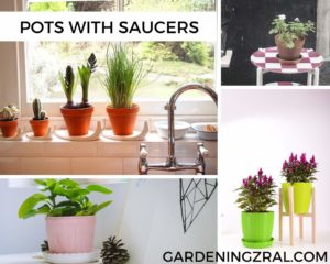 indoor plant pots with saucers