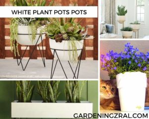 white indoor plant pots