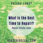best time to repair lawn