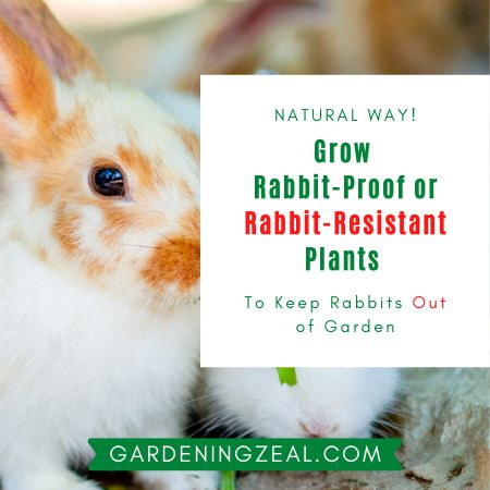keep rabbits out of garden